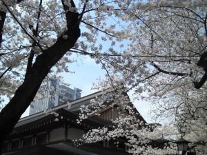 130328_Yasukuni-Shine